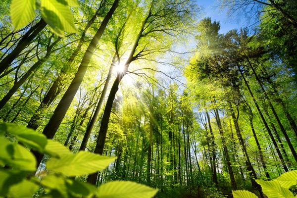 Imprim'vert engagement environnemental